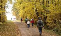 FRANCE : Les randonnées en forêt