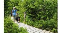 CONSEIL : Randonner en forêt avec son chien